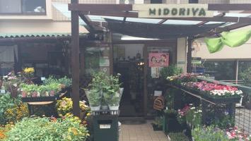 MIDORIYAのメインイメージ