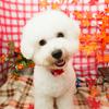 Dogsalon Cradleのサブイメージ