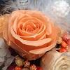 Orange Gardenのサブイメージ
